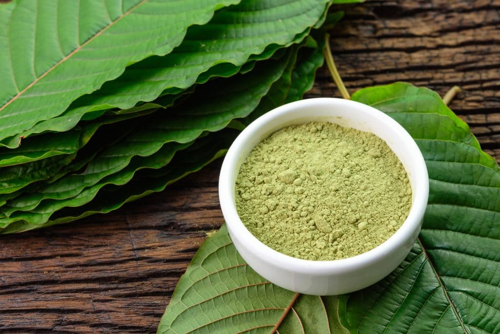 Mitragynina speciosa or Kratom leaves with powder product in white ceramic bowl and wooden table background, top view