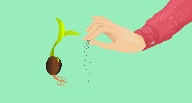 Kratom Seeds 101: Planting, Germinating, & Caring for Kratom Plants