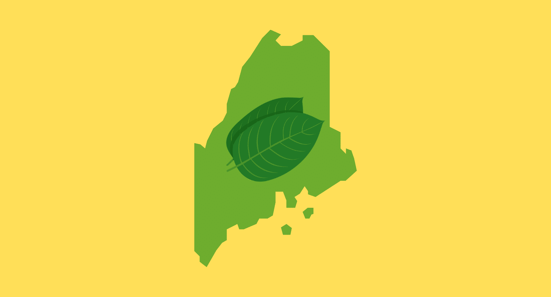 Is Kratom Legal in Maine?