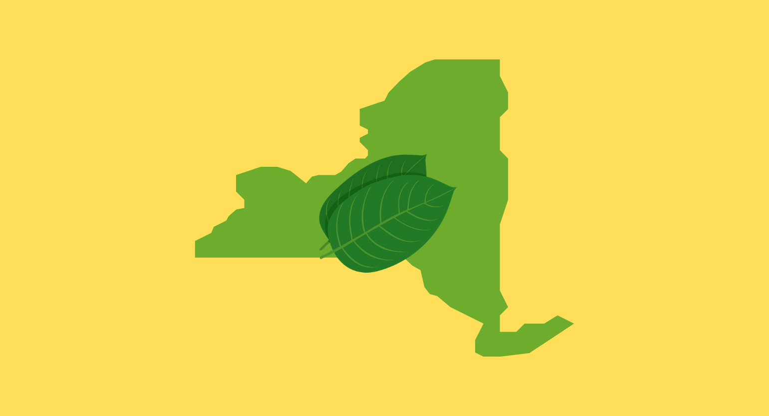Is Kratom Legal in New York? Where to Buy In-Store & Online in NY