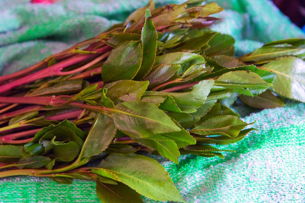 Khat plant, known for cathinone, a stimulant, which is said to cause excitement, loss of appetite, and euphoria